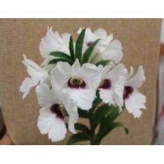 Dendrobium sanderae x Silver Bells