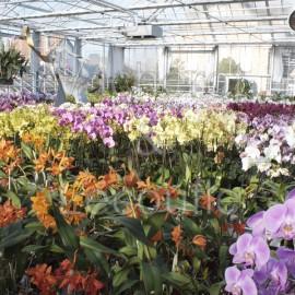Fêtes des mères - Orchidées Vacherot & Lecoufle