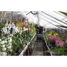 Portes ouvertes Orchidées Vacherot & Lecoufle