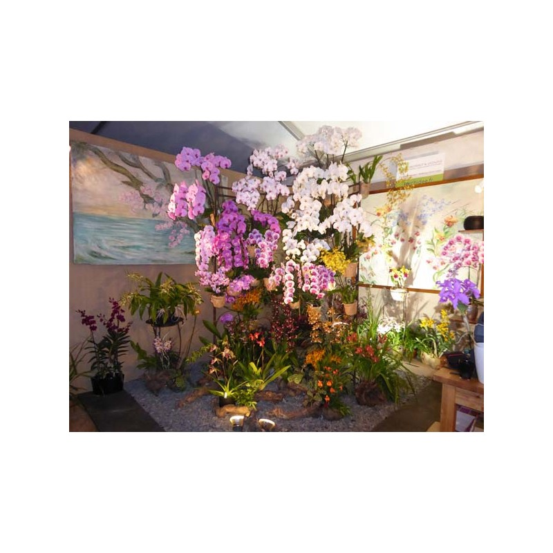 2018 05 18 journees des plantes de chantilly 60 vente notre univers. Black Bedroom Furniture Sets. Home Design Ideas