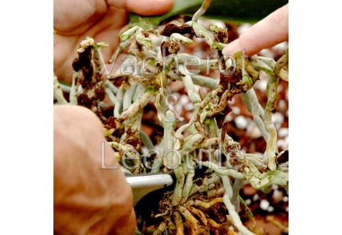 2018-05-26 - 10h30 Le rempotage des orchidées