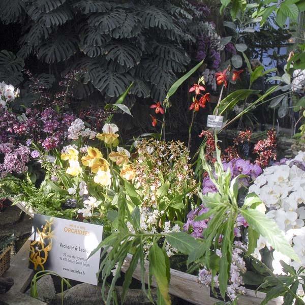 Expo orchidées Museum d'Histoire Naturelle de Paris