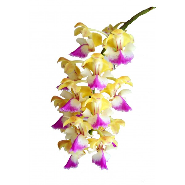 Aerides houlletiana