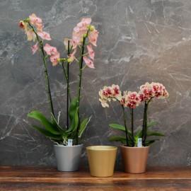 """Cache-pot orchidée """"Philippines"""" effet métallique ø12 cm"""