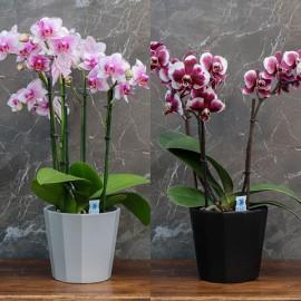 """Cache-pot orchidée """"Tokyo"""" ø12 cm"""