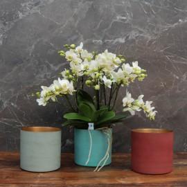 """Cache-pot orchidée """"Miami"""" métal effet brossé ø15 cm"""