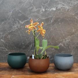 """Cache-pot orchidée """"Bolivie"""" métal effet brossé ø12 cm"""