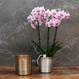 "Cache-pot orchidée ""New York"" métal effet brossé ø12 cm"