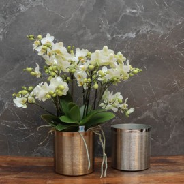 "Cache-pot orchidée ""New York"" métal effet brossé ø15 cm"