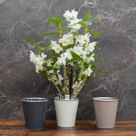"""Cache-pot orchidée """"Paris"""" métal ø12 cm"""