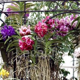 Portes ouvertes Orchidées Vacherot et Lecoufle