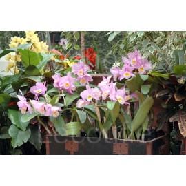 Expo-vente d'orchidées par Vacherot et Lecoufle - Parc Floral d'Orléans La Source