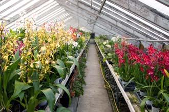 Serre froide - Orchidées Vacherot et Lecoufle