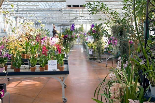 Serre exposition-vente - Orchidées Vacherot et Lecoufle