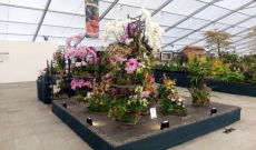 Juin 2018 - Médaille d'Or Chatsworth Flower Show
